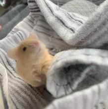Teen mouse dad :) Benji_11