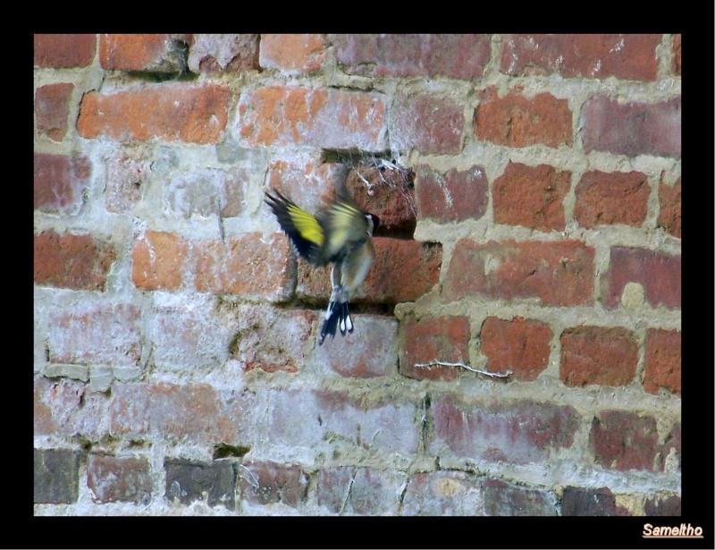 Les oiseaux sauvage que l'on rencontre dans le zoo 100_4713