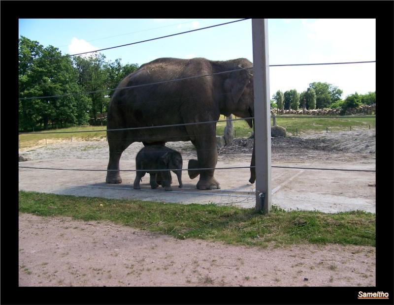 zoo Le Pal 100_5015