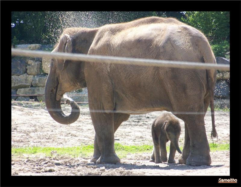 zoo Le Pal 100_5016