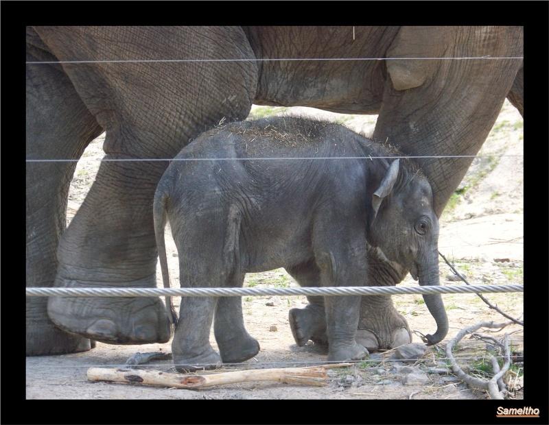 zoo Le Pal 100_5017