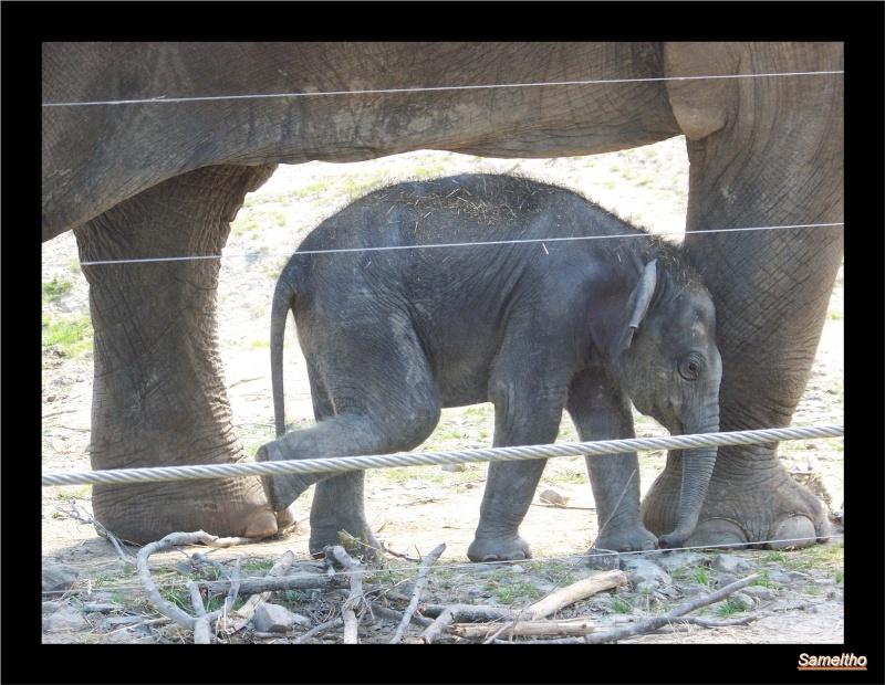 zoo Le Pal 100_5018