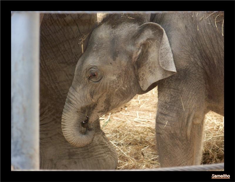 zoo Le Pal 100_5020