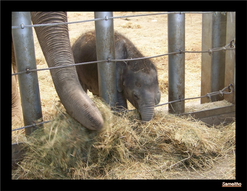 zoo Le Pal 100_5022