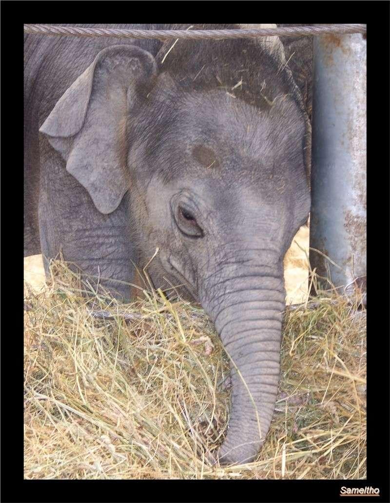 zoo Le Pal 100_5023