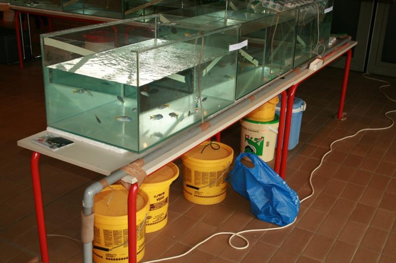Arlon 2012  06 mai  03610