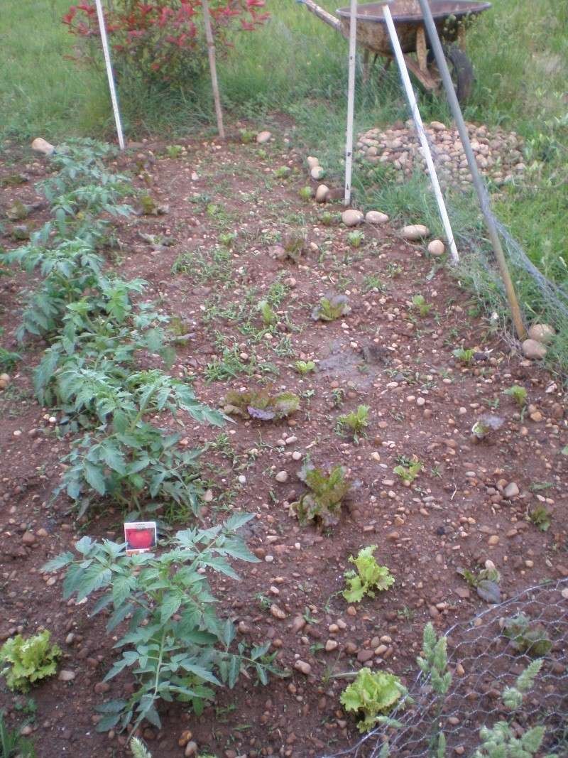 Mon jardin Orto_011