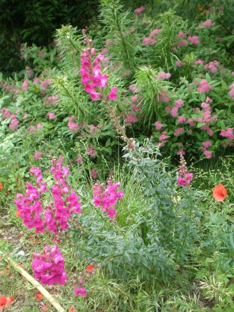 Mon jardin Orto_021