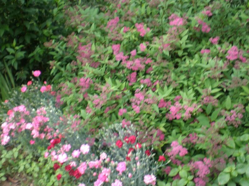 Mon jardin Orto_022