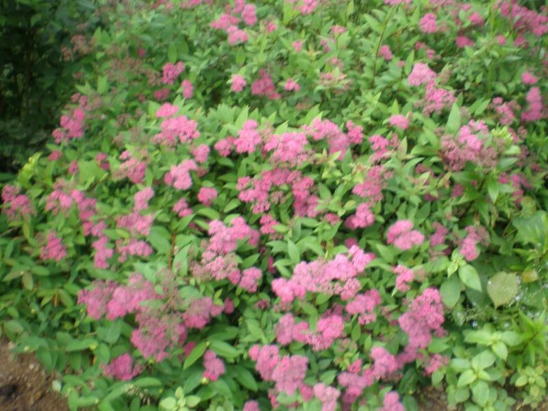 Mon jardin Orto_023