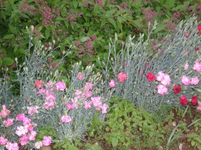 Mon jardin Sabato10