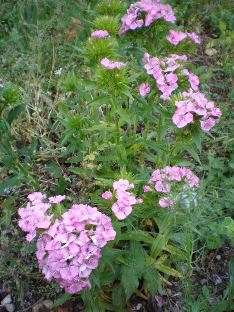 Mon jardin Sabato11