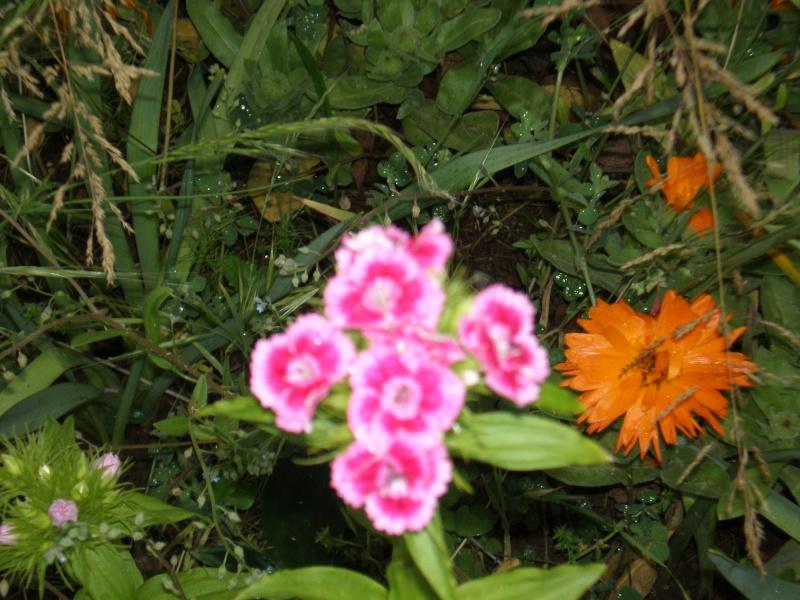 Mon jardin Sabato13