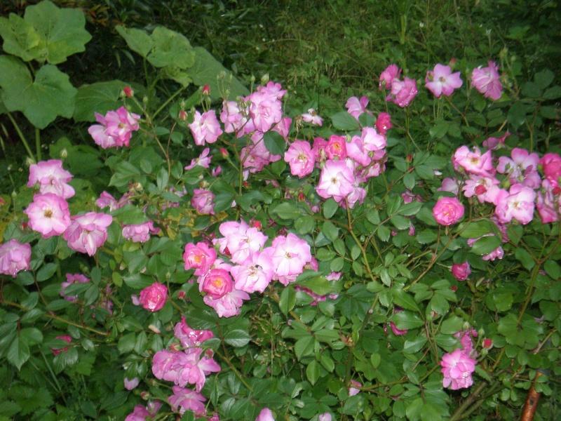 Mon jardin Sabato14