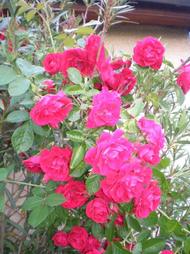 Mon jardin Sabato15