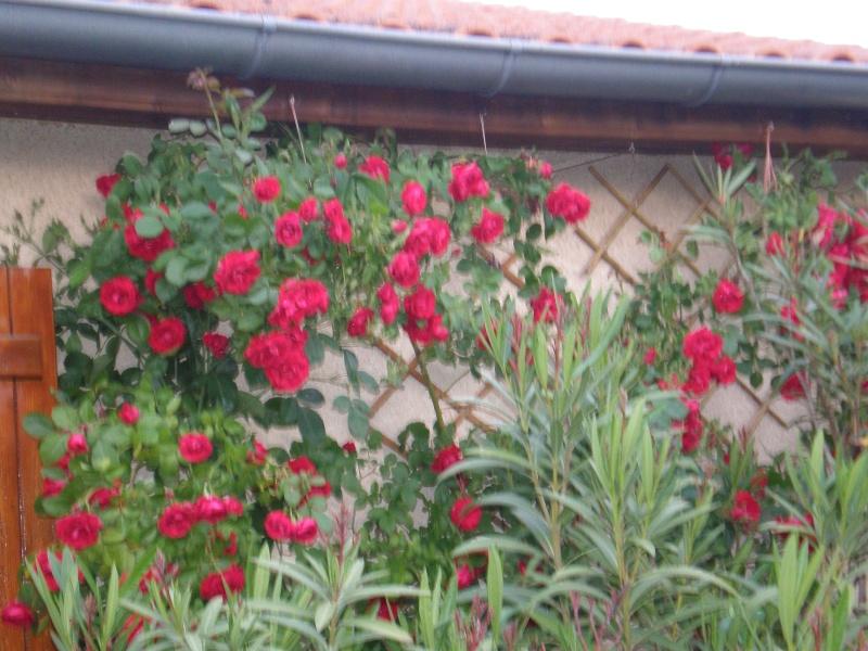 Mon jardin Sabato16