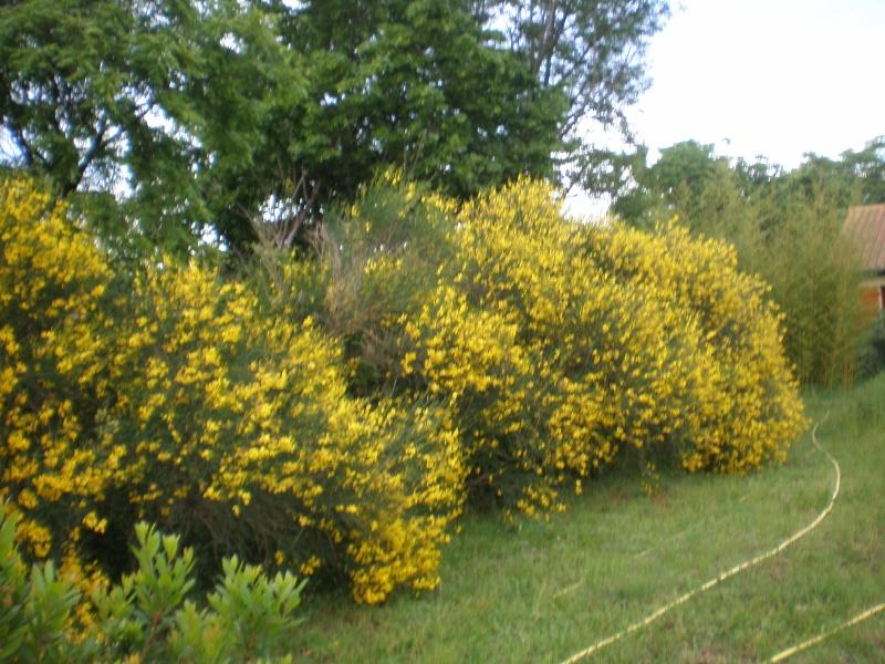Mon jardin Sabato19