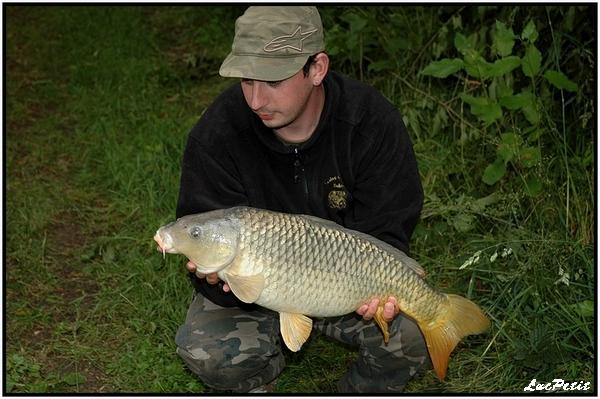 La pêche à roder (stalking) Carpe_10