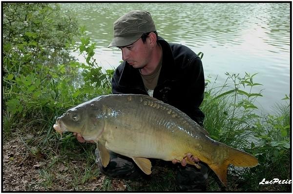 La pêche à roder (stalking) Carpe_11