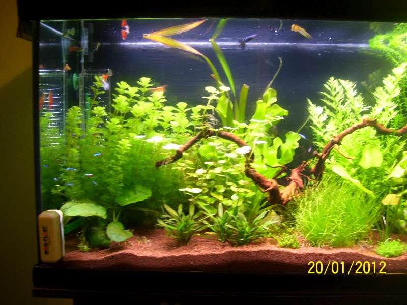 Aquarium 200 litres Tangawi 100_7621