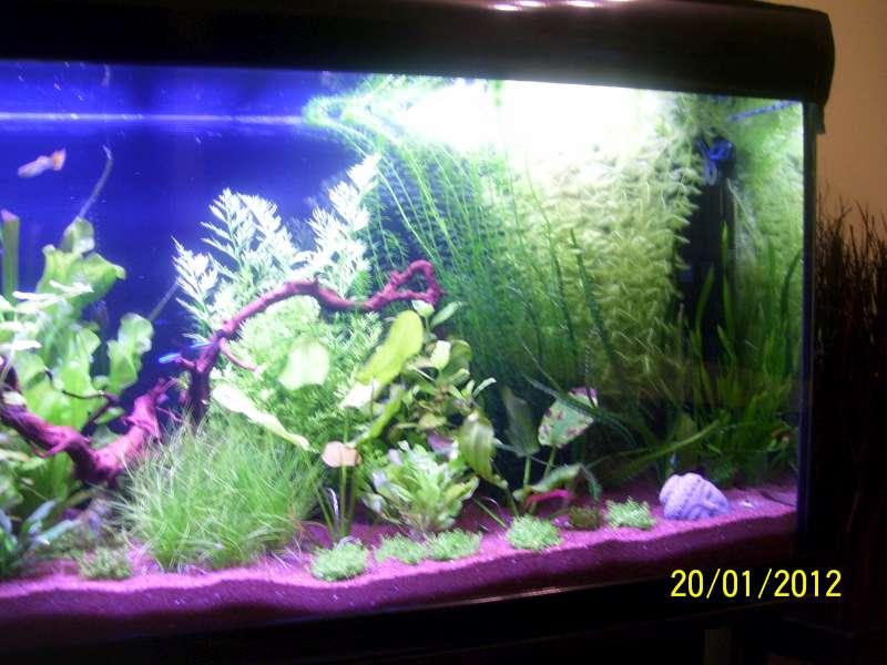 Aquarium 200 litres Tangawi 100_7622