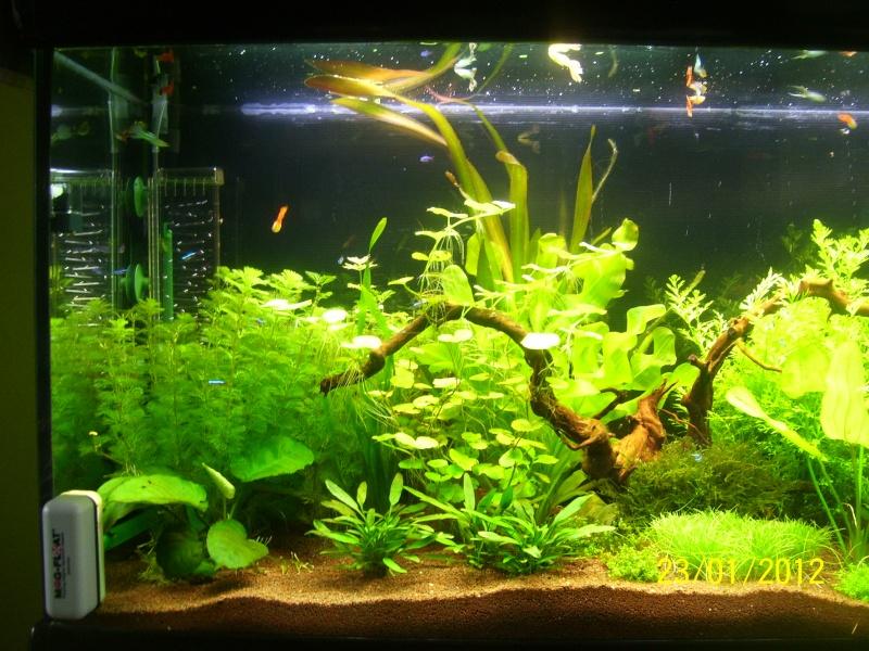 Aquarium 200 litres Tangawi 100_7623