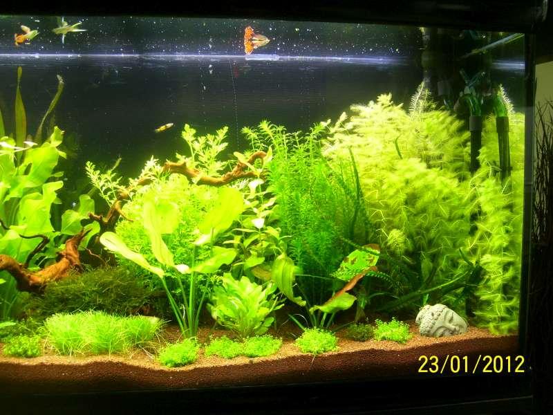 Aquarium 200 litres Tangawi 100_7624