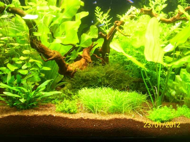 Aquarium 200 litres Tangawi 100_7625