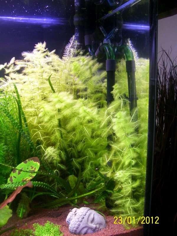 Aquarium 200 litres Tangawi 100_7626