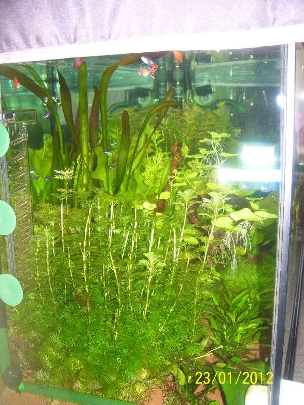 Aquarium 200 litres Tangawi 100_7627