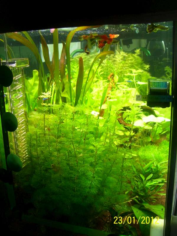 Aquarium 200 litres Tangawi 100_7628