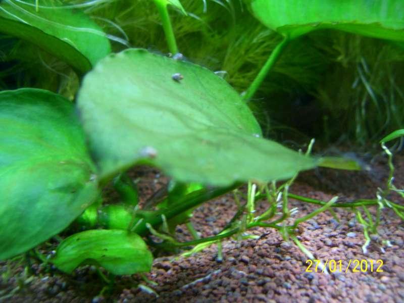 Problème algues cheveux 100_7710