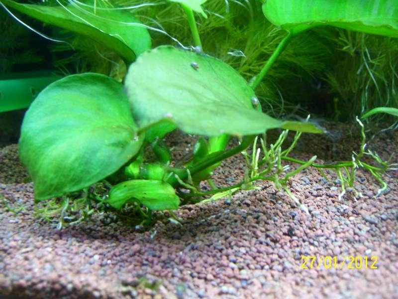 Problème algues cheveux 100_7711