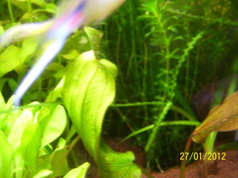 Problème algues cheveux 100_7713