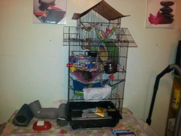 Photos de vos cages - Page 21 Cage_d10