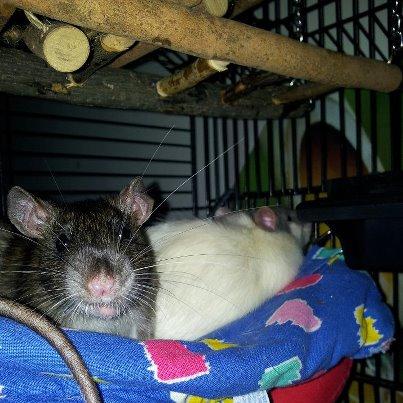 Mon petit Clemounet et son copain Helios - Page 3 Ratato11