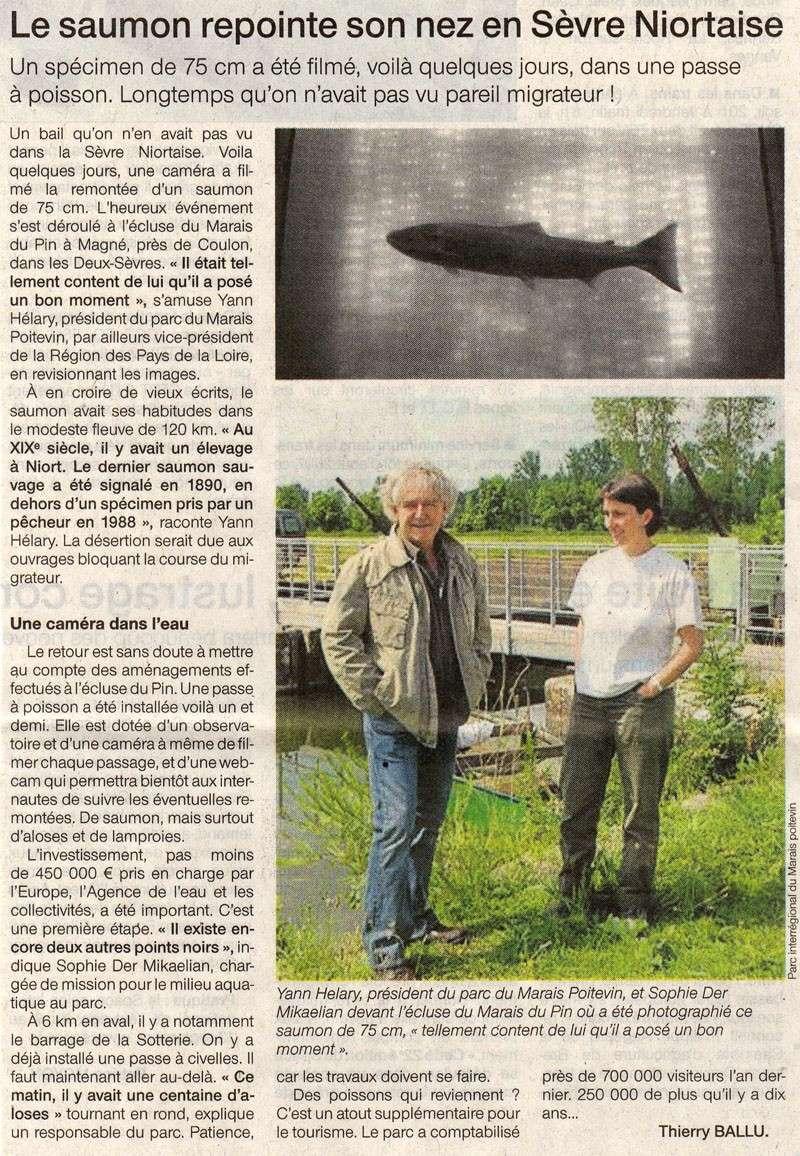 Passe à poisson du marais pin - Page 3 Saumon10