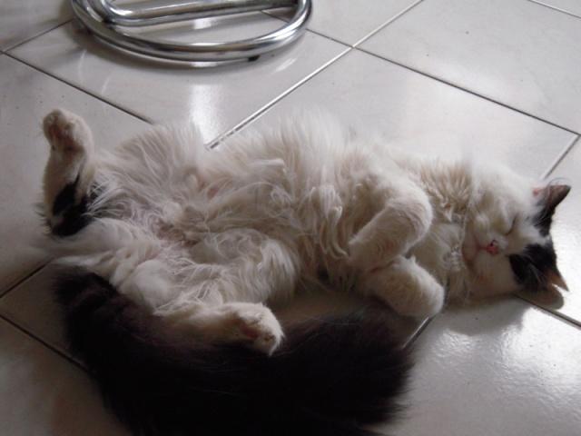 leucose: le traitement administré a mon jeune chat! Help les connaisseurs vp!! Dscn0010