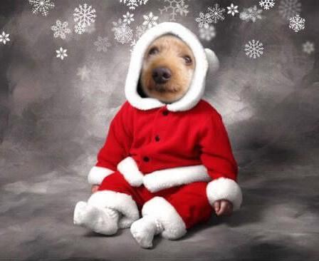 Le compte à rebours de Noel et du Jour de l'An Pixiz_11