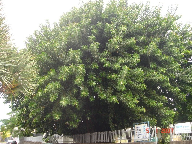 Identification de 3 plantes Dsc01315