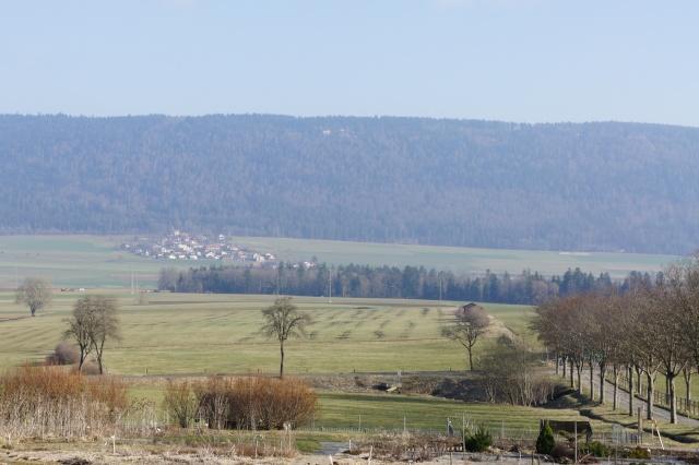 11me Swiss Betta Show, Cernier: 18-20 mai 2012  - Page 2 Dsc01010
