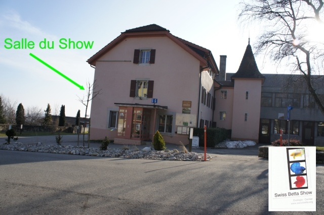 11me Swiss Betta Show, Cernier: 18-20 mai 2012  - Page 2 Show10