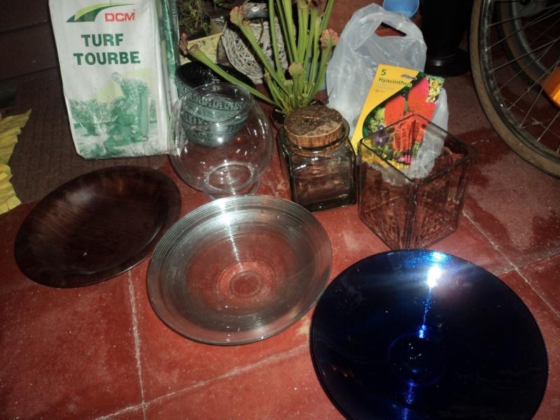 Sarracenia purpurea Dsc03610