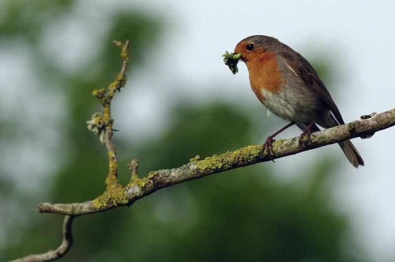 Animaux, oiseaux... etc. tout simplement ! - Page 4 Bird10