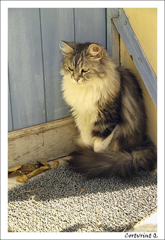 Le fil du chat - Page 6 Img_1911