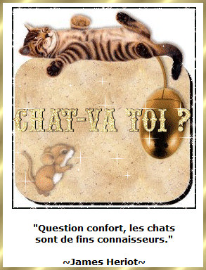 Les citations en images : Les chats Gi-pen13