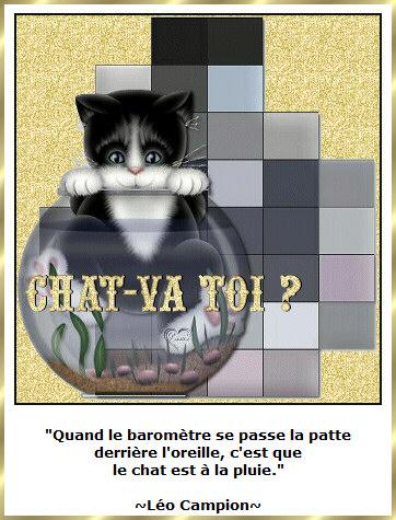 Les citations en images : Les chats Gi-pen15