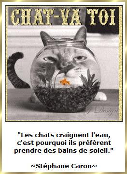 Les citations en images : Les chats Gi-pen17