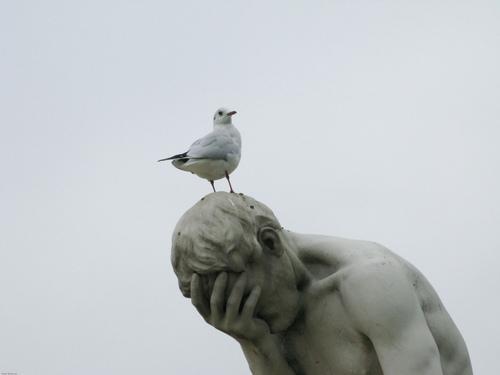 Métempsycose et présentation. - Page 12 Pigeon10