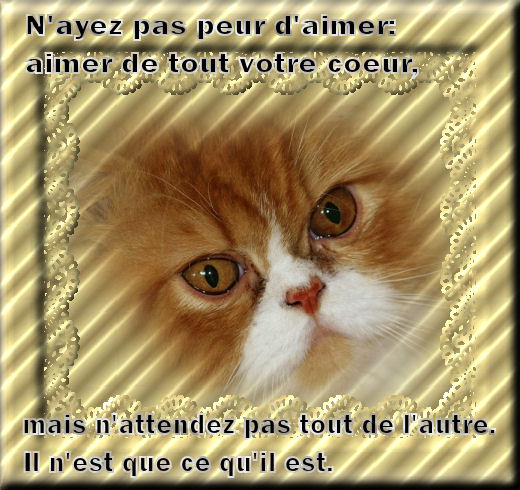 proverbes ...... citations........dictons........... - Page 3 Chat_a10